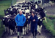 dairy-Cooperatives-Ireland