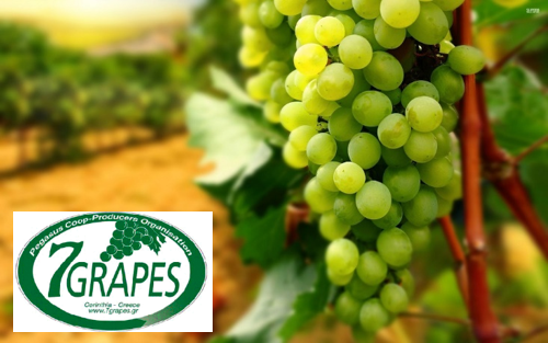 http://www.ypaithros.gr/wp-content/uploads/2015/12/7grapes.jpg.png