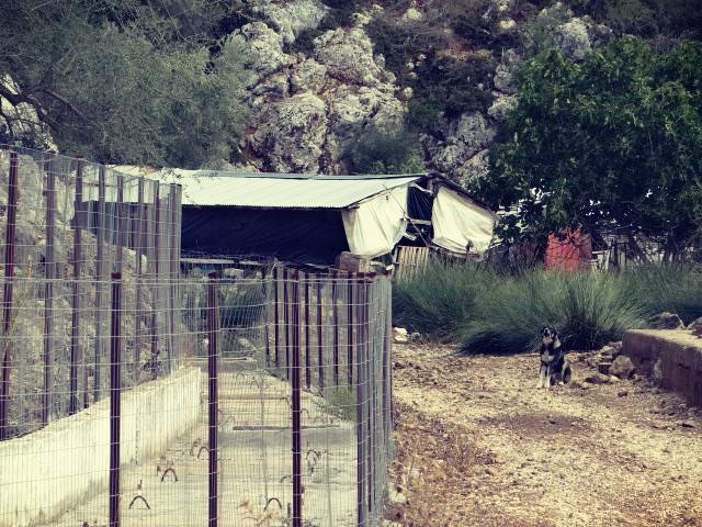 """Διακρίνεται η υδρομάστευση και στο βάθος κτηνοτροφική εγκατάσταση με τον """"φύλακα"""" σκύλο της περιοχής. Σεπτέμβριος 2017"""