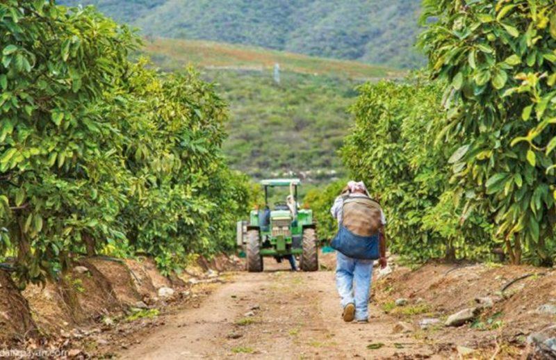 Φορολογικές δηλώσεις 2019: Αναλυτικός οδηγός για τους αγρότες