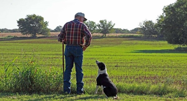 για άλλη μια χρονιά, τα δύο σημεία-κλειδιά για τις φορολογικές δηλώσεις των αγροτών είναι οι κωδικοί 037-038 και 049-050.