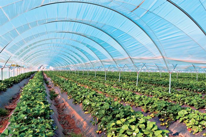 Τα απαραίτητα βήματα για να δημιουργηθούν οι συνθήκες που επιτρέπουν μια κανονική ανάπτυξη των φυτών χωρίς προβλήματα θρέψης