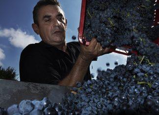 Γλυκό κρασί από τη Σάμο