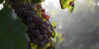 Η βιολογική καλλιέργεια απάντηση για την αγροτική οικονομία του αύριο