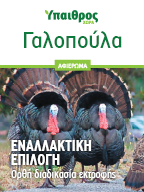 Γαλοπούλα: Ορθή διαδικασία εκτροφής