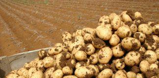 kalliergeia-patatas-prakrtikes-simvoules