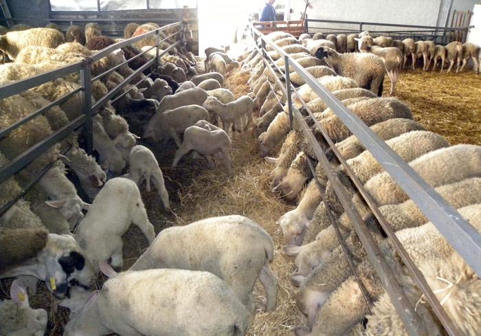 Προτεραιότητα σε κάποια μέτρα δίνεται στην αιγοπροβατοτροφία