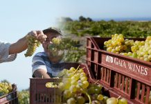 gaia-wines-sineteuxi