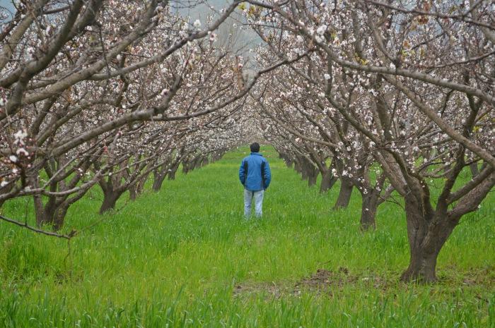 Οδηγός για τα οπωροφόρα, τα ακρόδρυα και τους ελαιώνες. Βασικές οδηγίες για τη σωστή εγκατάσταση και φύτευση των δέντρων και όλες οι καλλιεργητικές τεχνικές που πρέπει να γνωρίζετε.