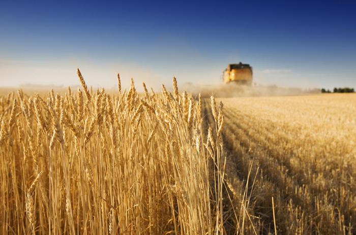 Κομβική για το σιτάρι η επιφανειακή λίπανση σε δύοο δόσεις