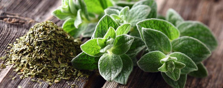 sporos-herbs-aromatika-fita