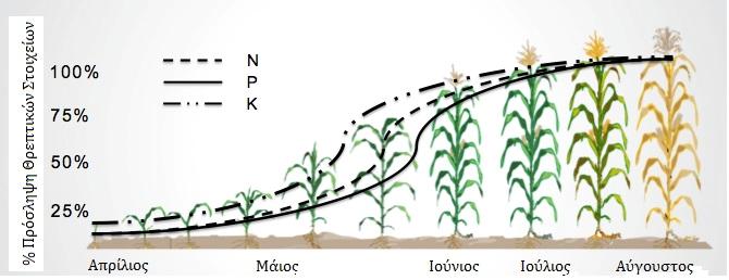 Εποχιακές ανάγκες Ν, Ρ, Κ κατά τη διάρκεια ανάπτυξης του καλαμποκιού