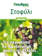Επιτραπέζιο σταφύλι: Το πιο εξαγώγιµο φρούτο της Ελλάδας