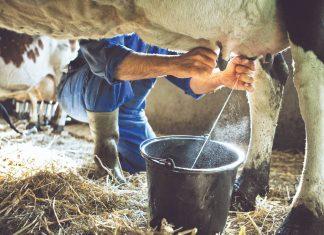 Βέλτιστες πρακτικές στις εκτροφές γαλακτοπαραγωγών ζώων