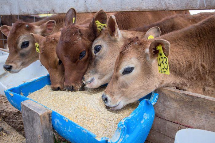 Η διατροφή θεωρείται ότι είναι αποτελεσματική όταν επιβαρύνει με το ελάχιστο δυνατό κόστος την παραγωγή κτηνοτροφικών προϊόντων