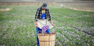 Saffron from Kozani becomes the gold youth elixir and brings surplus value