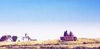 dutch-farm