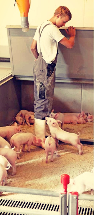 Denmark: Only one pork processing cooperative has a turnover of 8 billion euros