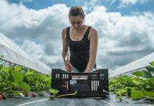 Εκπαιδευτικό πρόγραμμα για την αγρο-διατροφική αλυσίδα
