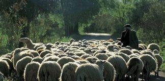 Ημερίδες για την εκτατική κτηνοτροφία στην Κρήτη