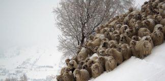Πώς να προστατέψετε τα ζώα σας από το χιόνι