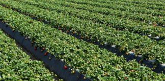 βιολογικής γεωργίας