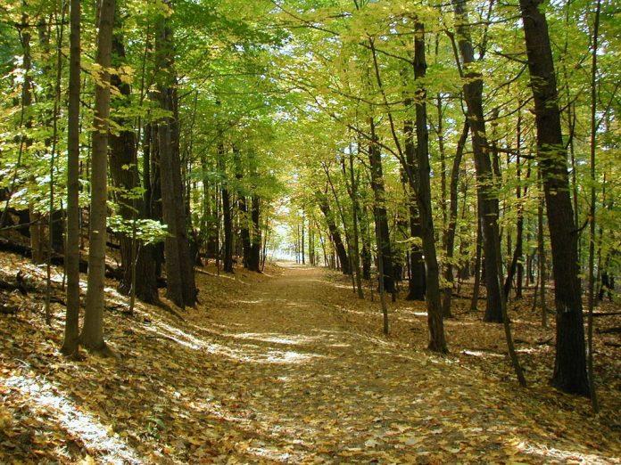 Προχωρά η διαδικασία για τους δασικούς χάρτες – Συζητείται σε ανάγνωση στην Επιτροπή Παραγωγής και Εμπορίου