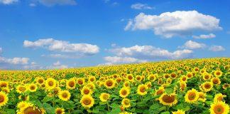 Νέα μονάδα Βιομάζας που θα παράγει ενέργεια από υπολείμματα γεωργικών καλλιεργειών ετοιμάζει η ΔΕΗ