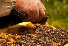Και το μέλι έχει τη γιορτή του: 7ο Φεστιβάλ Ελληνικού Μελιού