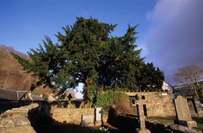 Spiegel: Το δέντρο που άλλαξε... φύλο