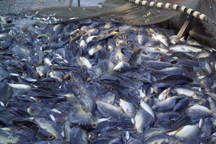 Ημερίδα για την αλιεία στο Πολύγυρο Χαλκιδικής
