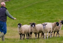 κτηνοτροφία στον Νομό Ηλείας