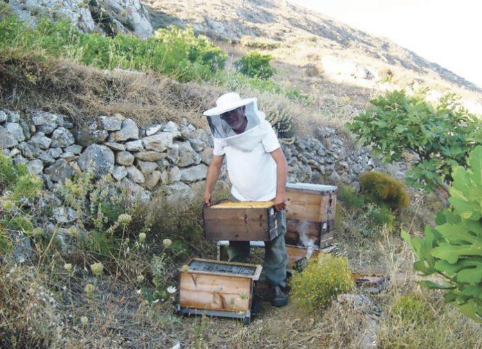 Έγκριση πίστωσης για παραγωγή και εμπορία προϊόντων μελισσοκομίας