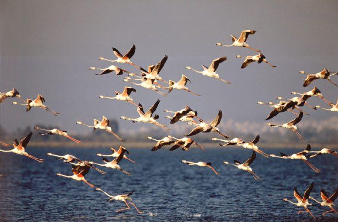 Αμβρακικός: Δακτυλίδια σε πουλιά για συλλογή πληροφοριών