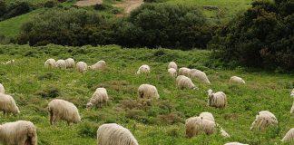 Ενισχύσεις de minimis 15.000€ για τους κτηνοτρόφους της Λακωνίας