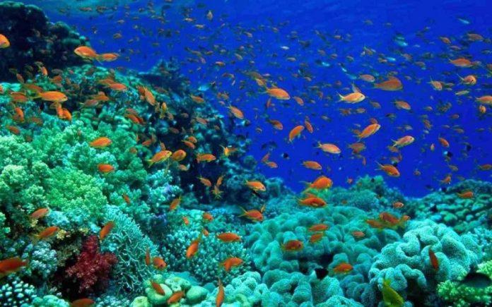 Kλιματική αλλαγή: Αφανίζεται η θαλάσσια ζωή