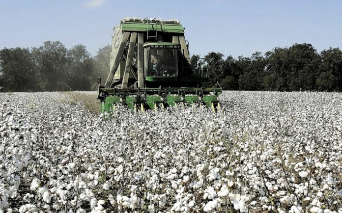 Στη Βουλή οι ζημιές σε βαμβακοκαλλιέργειες της Βοιωτίας