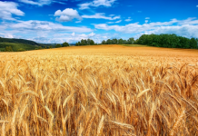 Οδηγός ενστάσεων και νέα φορολογία αγροτών στην «ΥΧ» που κυκλοφορεί