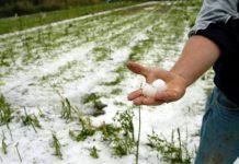 Κραυγή αγωνίας στη Βουλή από παραγωγούς του βορείου Έβρου, για την πρόσφατη χαλαζόπτωση