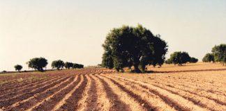 ελαιολάδου από Τυνησία