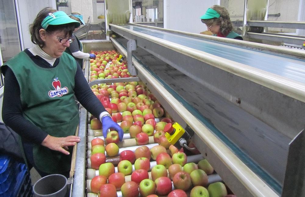 μήλα από τους παραγωγούς Ζαγορά Πηλίου