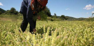 Την Τρίτη, το βοήθημα των 1.000 ευρώ σε πολύτεκνες αγρότισσες