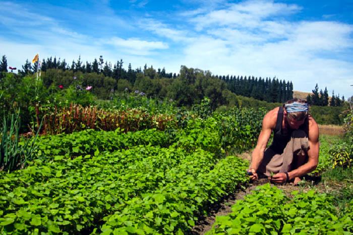 Ο Αγροτουρισμός είναι ένα όραμα