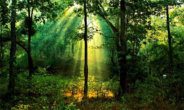 Ανοίγει ο δρόμος για καλλιέργειες σε εκχωρημένες δασικές εκτάσεις