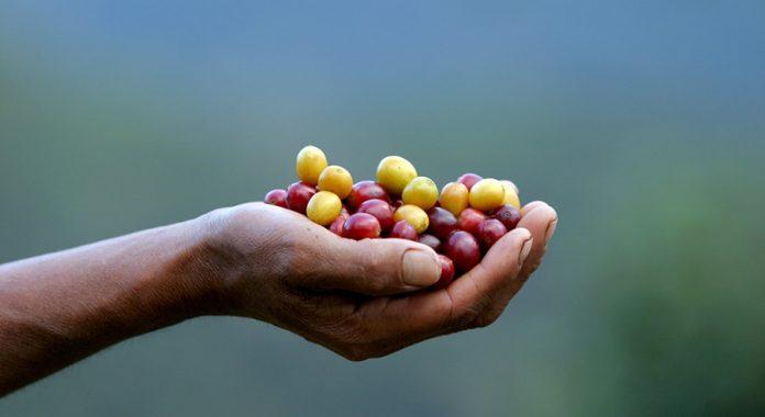 Ετήσιο όφελος 12,2 δισ. από τον αγροδιατροφικό τομέα