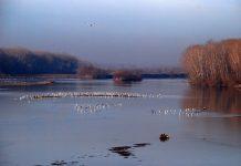 Δημιουργία διακρατικού ελληνοβουλγαρικού διαχειριστικού φορέα του ποταμού Έβρου