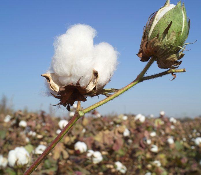 Οι τελευταίες εκτιμήσεις για την παγκόσμια αγορά βάμβακος