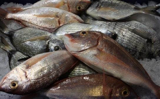 Χρήστος Ξυραδάκης: Κραυγή αγωνίας από τους αλιείς του Βόλου