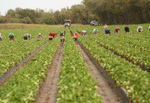 Συνδέουν την αξιολόγηση με το φορολογικό των αγροτών οι δανειστές