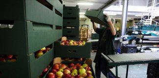 Κατά 16,2% αυξήθηκε η αξία των εξαγωγών φρούτων και λαχανικών το οκτάμηνο Ιανουαρίου-Αυγούστου